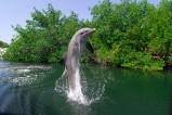 Key Largo in Florida ist bekannt dafür, dass man mit Delfinen schwimmen kann.