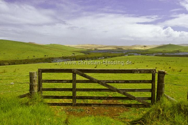Viehweide bei Kaitaia auf der Nordinsel von Neuseeland